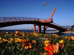 Bar Mano Kprs - zmir (Yener ZTRK) Tags: travel bridge flowers blue sea turkey trkiye aegean explore turquie trkorszg trkei welcome turkije smyrna 1943 izmir kpr trk ege turchia iek  turkei egedenizi balova turcha trkiyecumhuriyeti inciralt barmano kentorman turkqua yenerztrk  t t tp  t egeninincisi inciraltdalyan baheleraras