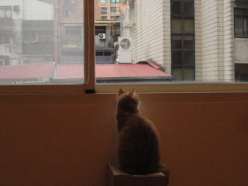 查理看窗外