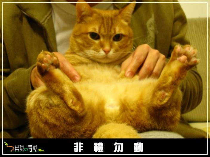 BU子論禮_06