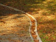 foglie sul vialetto