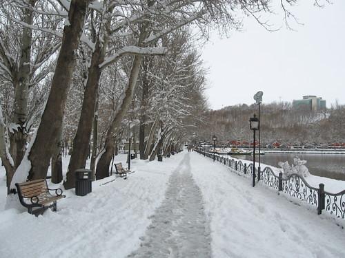 ائل گلی در زمستان by you.