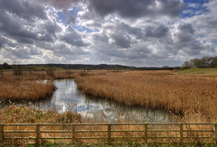 England: Northamptonshire - Reed Bed View (Tim Blessed) Tags: uk sky nature water clouds reeds landscapes countryside scenery lakes wetlands ponds singlerawtonemapped
