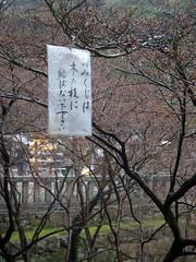 (shayhowe) Tags: japan tokyo shay howe
