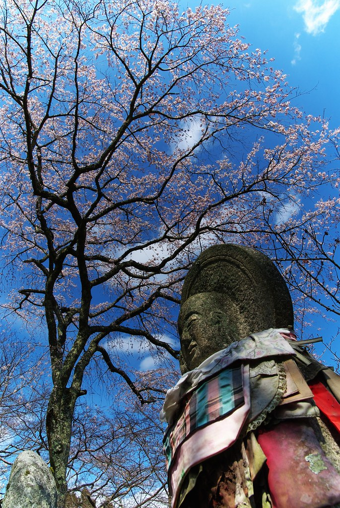 Cherry in Hase-dera Temple