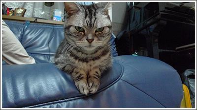 ソファーに座った猫