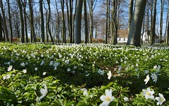 Swedish Spring (wide) Wallpaper (claustral) Tags: wallpaper white green skne spring sweden background country bucolic scania wtw 1680 bedofflowers lx3