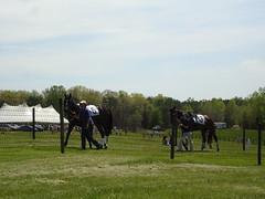 DSC07025 (ryeamans525) Tags: friends uva horserace foxfield