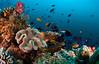 reef1889pcw (gerb) Tags: blue fish topf25 water beautiful topv111 coral 1025fav 510fav wow ilovenature cool topv555 topv333 underwater 500v20f topv1111 topv999 scuba fv5 pi topv777 d200 reef maldives topv3333 aquatica 105mmf28gfisheye 1000v40f golddragon tvx alemdagqualityonlyclub sunkentreasureaward