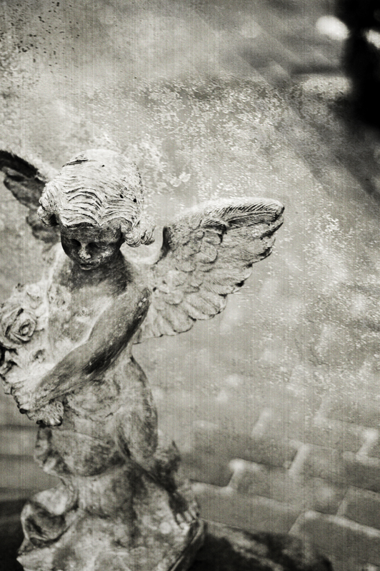 {jasmine's angel}