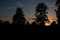 Sunset Silhouettes (Rutger Blom) Tags: trees sunset sky lund public zonsondergang bomen europa europe sweden skandinavien silhouettes himmel sverige lucht scandinavia träd trd zweden solnedgång silhuetter scandinavien skånelän skneln solnedgng