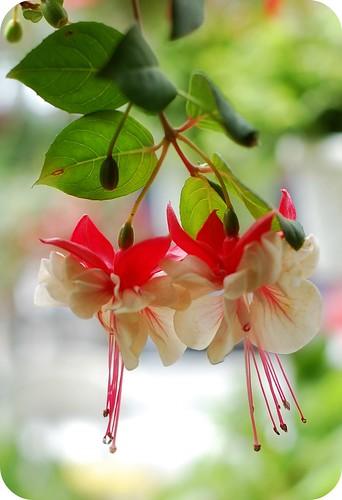155:365 Mystery flower