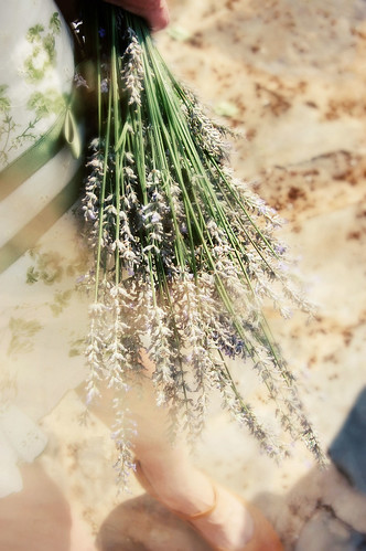 gathered lavender