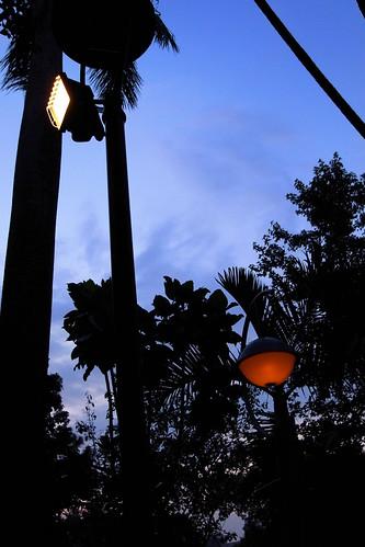 你拍攝的 植物園夜景。