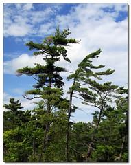 Trees (Lisa-S) Tags: blue trees sky ontario canada green clouds lisas allrightsreserved burleighfalls 3929 thegroupofseven copyrightlisastokes