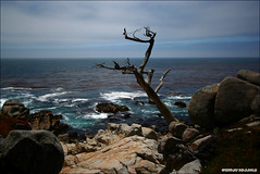 17 mile drive (Tiffany Dearborn) Tags: ocean california ca wood blue sky tree green water rocks pacific bright branches pch highway1 pebblebeach 17miledrive pacificgrove pacificcoasthighway