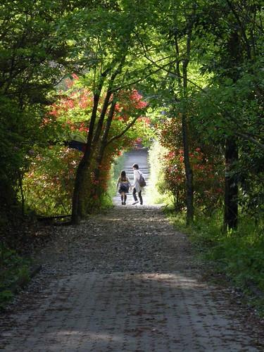 三郷町の千本桜並木道