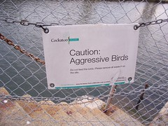 Don't worry... (Sailor Coruscant) Tags: camping holiday sign warning fence island sydney australia games adventure caution cockatoo popculture cockatooisland angrybirds aggressivebirds