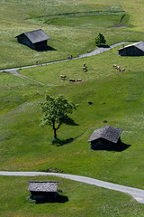 Spring Meadows (Jeremy Vickers Photography) Tags: houses alps tree green grass switzerland cows hiking farm meadows huts fields berneseoberland canonef135mmf2lusm canoneos40d