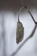 Leaf Cocoon 1