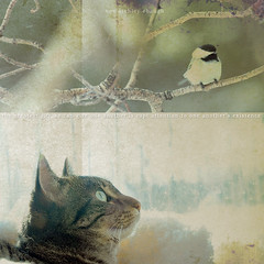 . . . (anniedaisybaby) Tags: winter friends baby bird texture window cat focus diptych feline quote tabby study chickadee attention bsquare belovedpet creativephoto cc200 thelittledoglaughed poetrypages piccolecose brillianteyejewel canadianfemalephotographersgroup theperfectphotographer goldstaraward artwomen taleofthecat hourofthesoul lesamisdupetitprince magicartoftextures famoussquarecaptures thecatwhoturnedonandoff artistictreasurechest imagesforthelittleprince oscarsurrealeous lovelylovelyphoto arttreasures wellonceuponatime sueatchleyebaugh texturethankyoujaiel