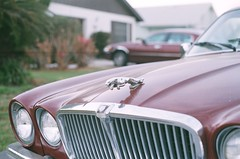 Jaguar (Burrosito_Bandito) Tags: old film car 35mm vintage emblem photo ride minolta picture photograph vehicle jaguar xg1