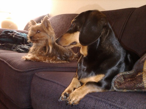 dogs on the couch