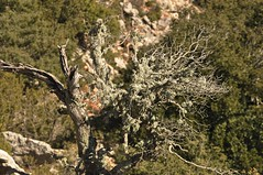 DSC_0429 (vittuzzi) Tags: alberi trekking natura montagna ginepri boschi