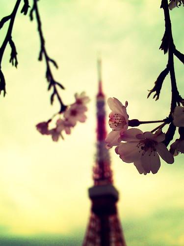 sakura, tokyo tower and spring