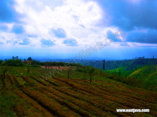 Blue Cloud Over The Mount Arjuno - Malang - East Java