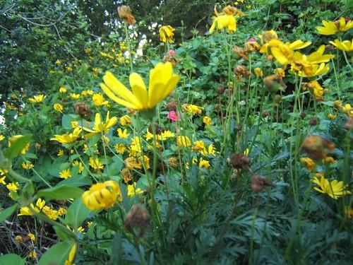 garden_yellow