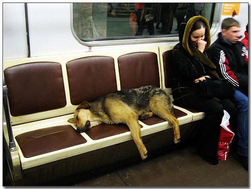 2009-04-19-「資訊」看看別人想想自己~保護動物不是喊口號喊爽的~莫斯科流浪狗搭地鐵~
