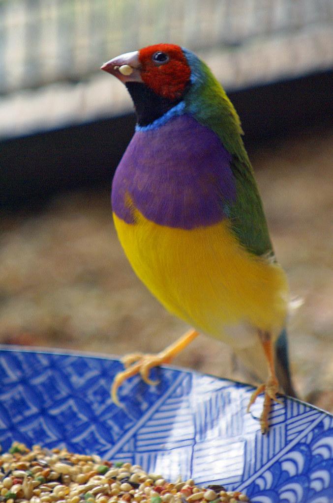 Un oiseau de toutes les couleurs