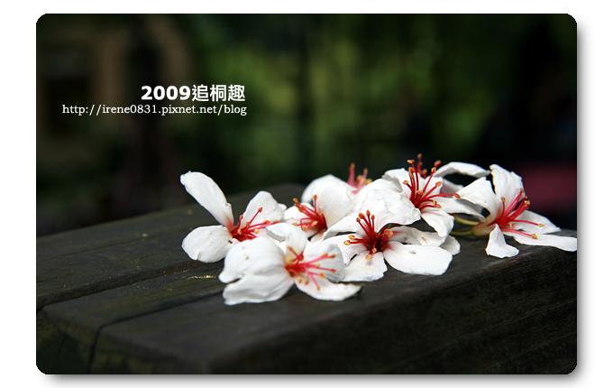 090427_18_油桐花坊