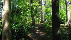 DAYTIME TREEPIX (leftoverfiller) Tags: seattle treestump woodlandpark andstuff sometrees andastump