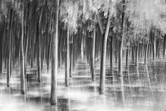 flood wave 2 (icola tramari) Tags: longexposure italia flood po piena icm mosso veneto rovigo lungaesposizione blackwhitephotos polesine floodwave intentionalcameramovement ondadipiena nicolatramarin