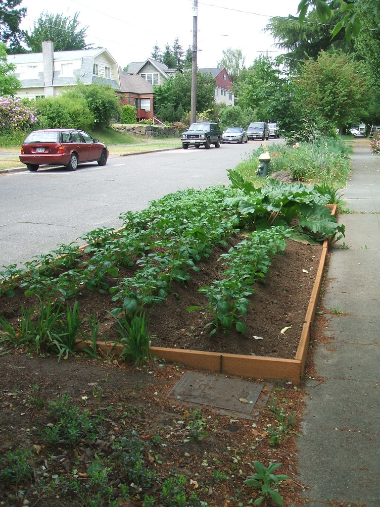 Potato/rhubarb planter box