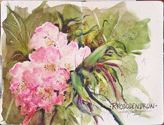 Flower Delivery Glasgow on Taos Rhododendron 1  Ricky Holtman  Tags  Newmexico Flower Art