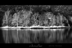 Bosque Blanco / White Forest (DiEgo bErrA) Tags: