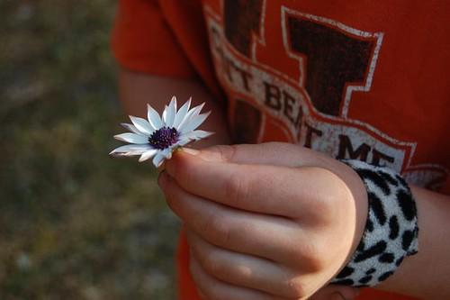 joshua's flower