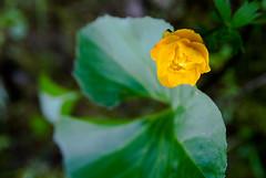 (Ph_maniak) Tags: trip flowers siberia riussia chunyatrip
