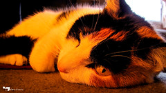Cansancio ([Sies:OFF]) Tags: orange pet eye cat canon nose fire ojo photography photo foto sleep gata fuego fotografia diseo naranja mota mascota nariz osorno duerme sies sx10is