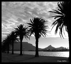 Love is easy... (Sonja Mller) Tags: sunset summer blackandwhite bw holiday reflection water sunshine clouds silver palms capetown monotone palmtrees newyearseve tablemountain milnerton signalhill woodbridgeisland platinumphoto colorphotoaward silversunset 31december2008 sonjamller