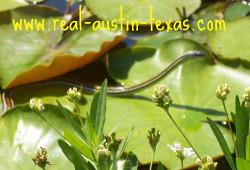Austin Texas Attractions - Lady Bird Wildflower Center - Austin Texas