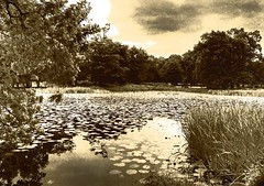 365-043 Pond At Dunham Massey, Cheshire UK In Sepia (Hotpix [LRPS] Hanx for 1.5M Views) Tags: camera uk england hot slr sepia club night digital canon studio photography warrington pond nikon pix village cheshire pics nt district sony group photographic cameras walkabout dslr toned society picks dunham bellhouse jessops massey a50 hotpix hotpics 365days a56 wildings grappenhall gyca hotpicks grappenhallvillage hotpixfreeservecouk wwwthewdccorguk thewdccorguk wdccorguk bellhouseclub