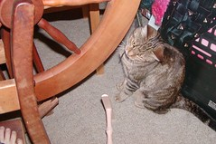wheel_cat