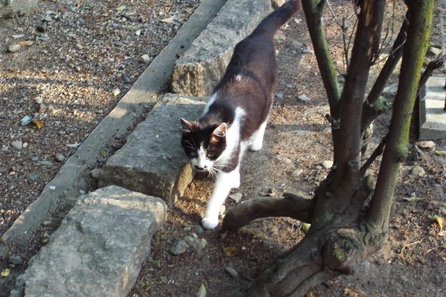 Today's Cat@2011-05-14