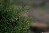 drops (ƒlรƒคђ ) Tags: green drops شجر قطرات قطره زرع مآء flsfah