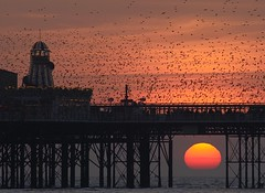 Brighton triple clich (Alex Bamford) Tags: sunset pier brighton explore starlings ogm interestingness39 explored i500 alexbamford thebigbambooly brightonhoverocktherealphotographicdeal wwwalexbamfordcom