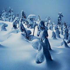 Winter Fairy Tales II (Svein Skjåk Nordrum) Tags: blue trees winter snow nature norway fairytale landscape outdoors 50mm nordmarka lightroom oslomarka 5dmarkii heikampen