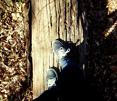baby steps (skulli died) Tags: tree shoes vans